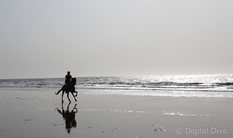 Horse riding in Gambia