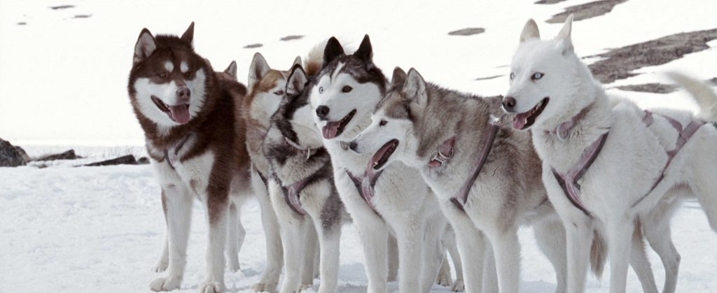 Huskies in Eight Below